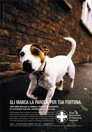 campagna abbandono cani
