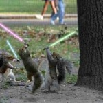 scoiattoli star wars