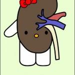 hello kitty kidney