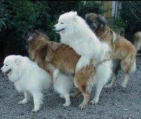 orge cani