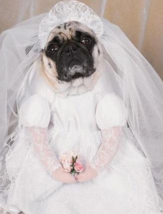 cane vestito da sposa