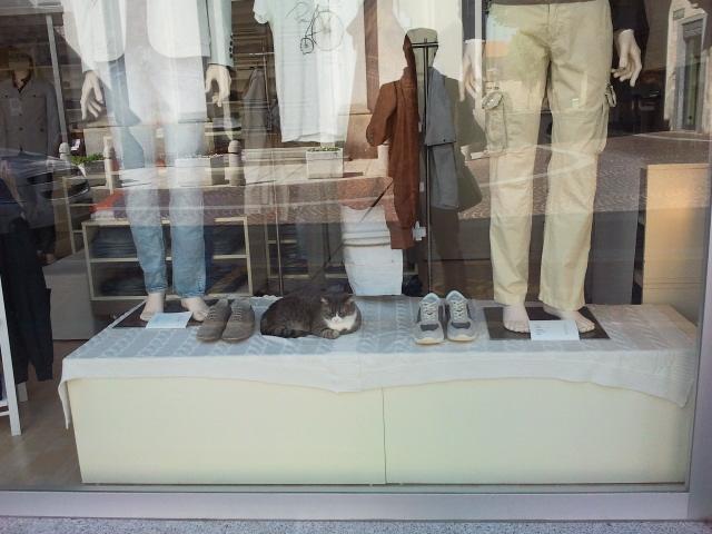 gatti in vetrina