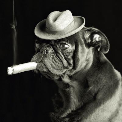 cane che fuma