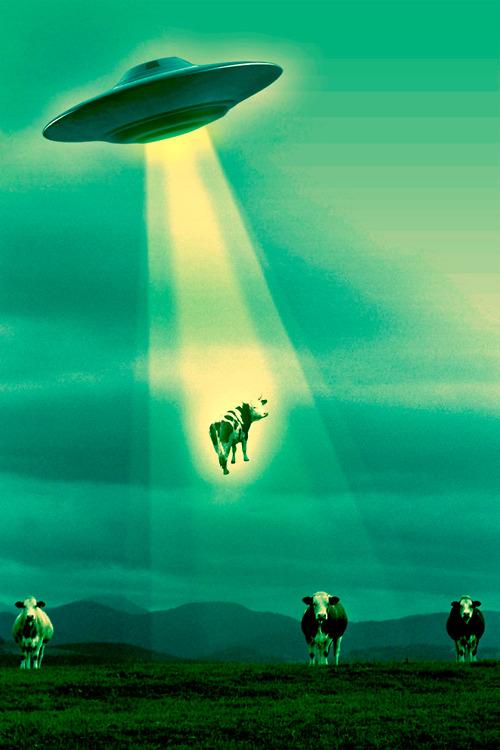 alieni rapiscono mucche