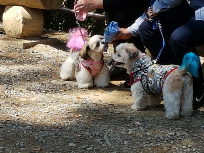 cani giapponesi
