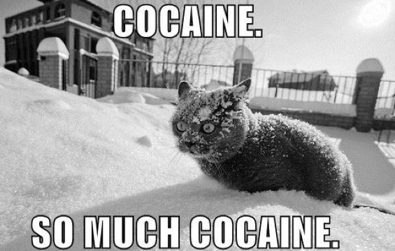 gatto cocaina