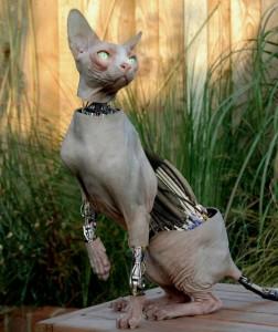 gatto nudo robot
