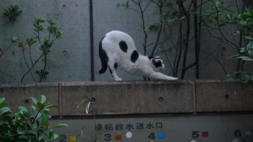 gatto ueno