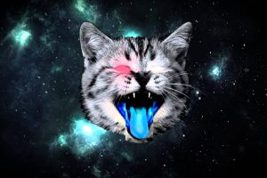 gatto nello spazio
