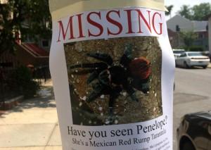 missing tarantula