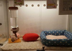 pet shop japanese