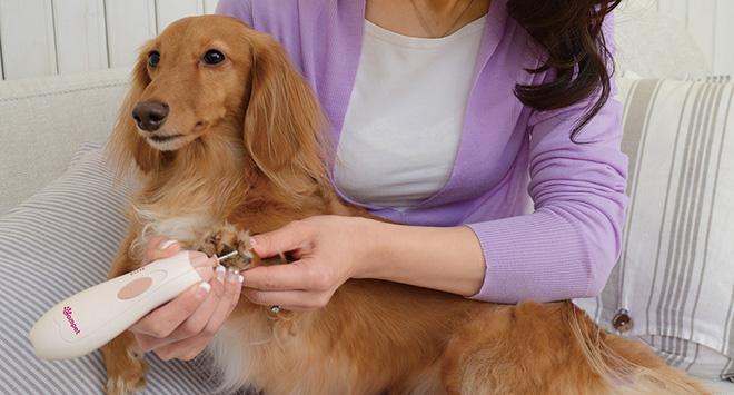 linee cosmetiche per cani