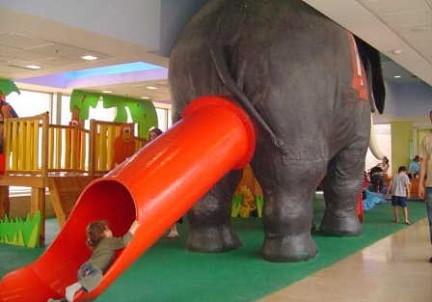 elefante che caga