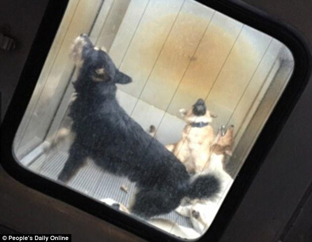 torture dog japan