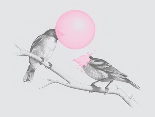 brock davis birds