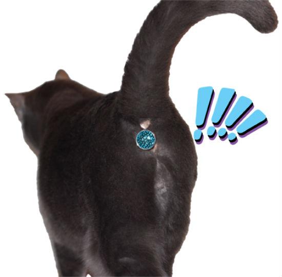 twinkle tush gioiello per il culo del gatto